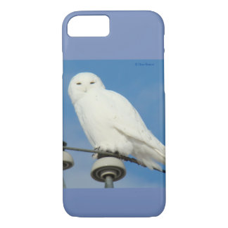 B0050 Snowy Owl Iphone 8/7 phone case