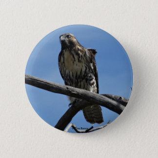 B0054 Swainsons Hawk 2 Inch Round Button