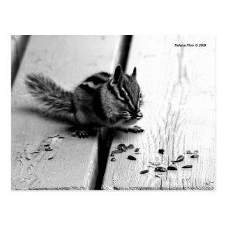 B&W Chipmunk Squirrel Postcard
