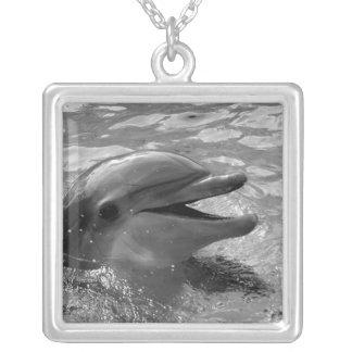 B/W dolphin porpoise head mouth open pendant