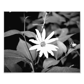 B&W Flower Photo Print