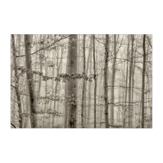 B&W Forest with morning fog behind the trees Acrylic Wall Art