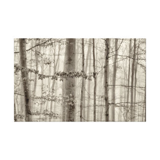 B&W Forest with morning fog behind the trees Canvas Print