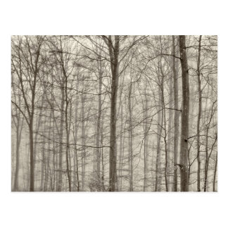 B&W Forest with morning fog behind the trees Postcard