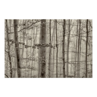 B&W Forest with morning fog behind the trees Poster