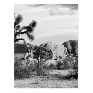 B&W Joshua Tree National Park Postcard