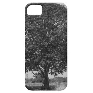 B&W Mango Tree iPhone 5 Cover