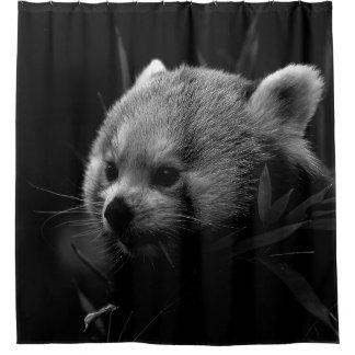 B&W red panda