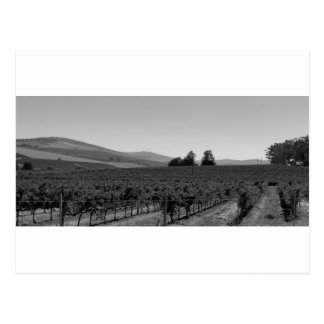 B&W Vineyard Postcard