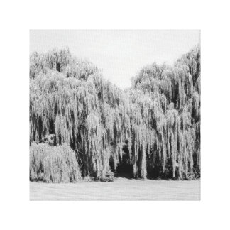 B&W Weeping Willow Trees Canvas Print