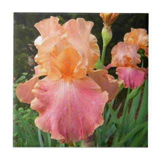 BA- Peach Iris Floral Art Tile