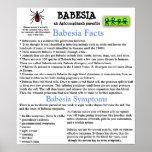 Babesia Information Fact Sheet Poster