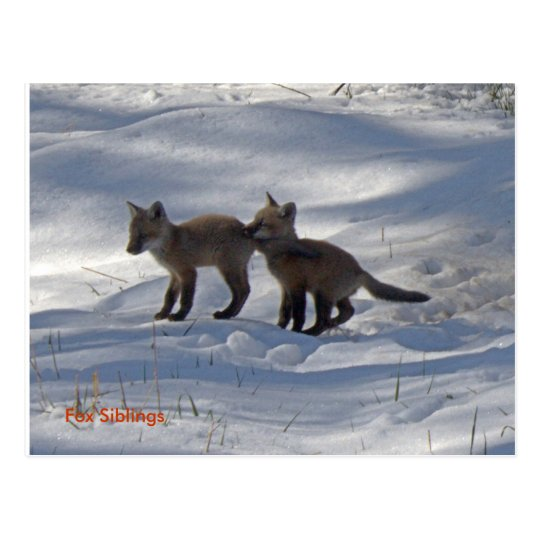 babies copy, Fox Siblings Postcard
