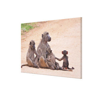Baboon family sitting on ground gallery wrap canvas