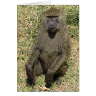 Baboon male card