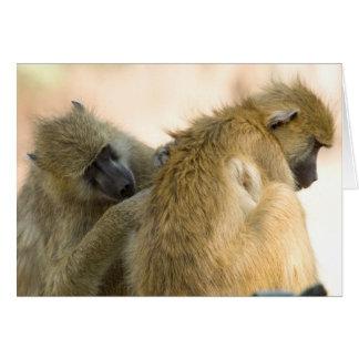 Baboons South Luwanga Card
