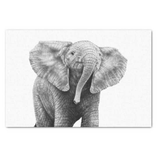 Baby African Elephant Tissue Paper