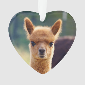 Baby Alpaca Heart Ornament