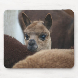 Baby Alpaca Mouse Pad