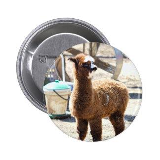 Baby Alpaca - Vicugna pacos Pin