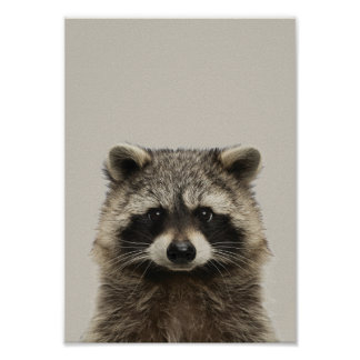 Baby Animals Nursery Poster - Racoon