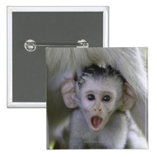 Baby baboon underneath its mother 2 inch square button