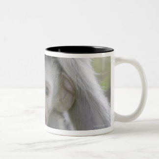 Baby baboon underneath its mother Two-Tone coffee mug