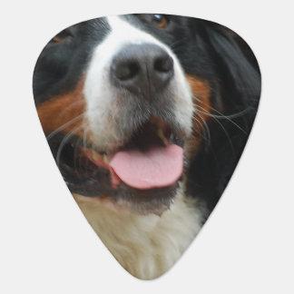 Baby Bernese Mountain Dog Guitar Pick