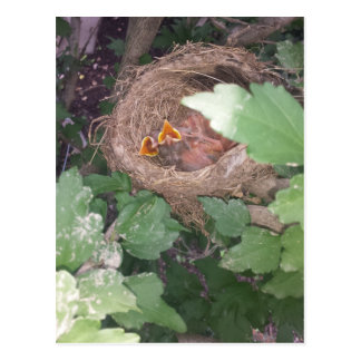 Baby birds sing the song of springtime.... postcard