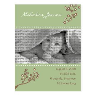 Baby Birth Announcement Sage Green Branch Design Postcard