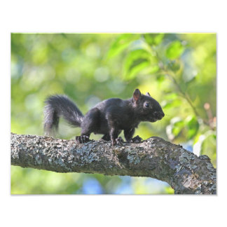 Baby Black Squirrel Photograph