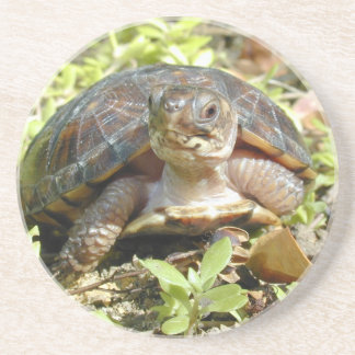 Baby box turtle Coaster