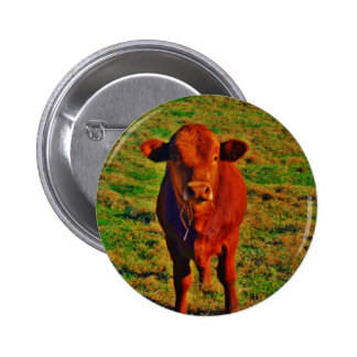 BABY BROWN COW EATING PINBACK BUTTON