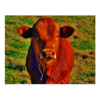 BABY BROWN COW EATING POSTCARD