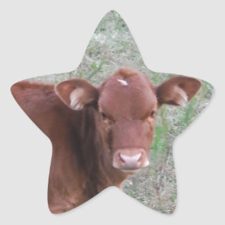 Baby Brown Cow face Star Sticker