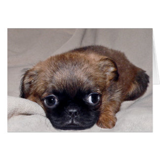 Baby Brussels Griffon Card