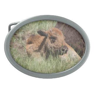 Baby Buffalo Buckle Oval Belt Buckles - Customized