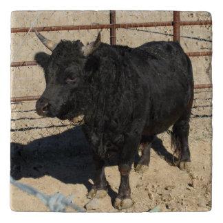 Baby Bull Kitchen Custom Trivet