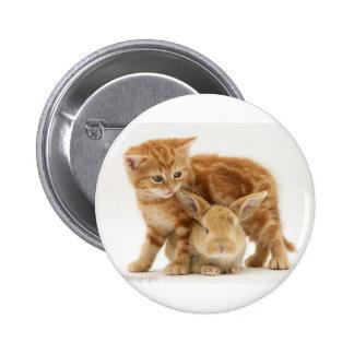 Baby Bunny and Orange Kitten Meet 2 Inch Round Button