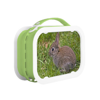 Baby Bunny Lunch Box