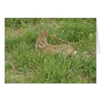 Baby Bunny Sentry Card