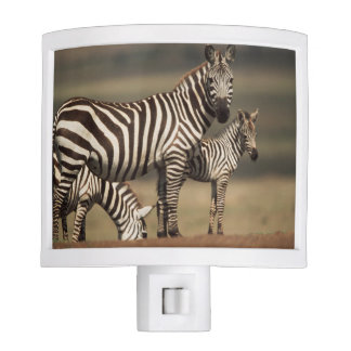 Baby Burchell's Zebra with mother Nite Light