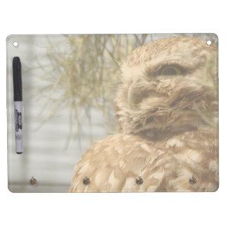 Baby Burrowing Owl Dry Erase Board