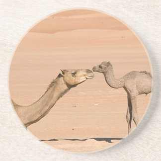Baby Camel and its Mother Beverage Coaster