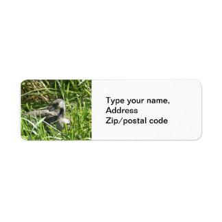 Baby Canada Goose Return Address Labels
