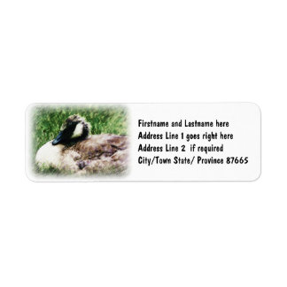 Baby Canadian Goose Photo Sketch Return Address Label