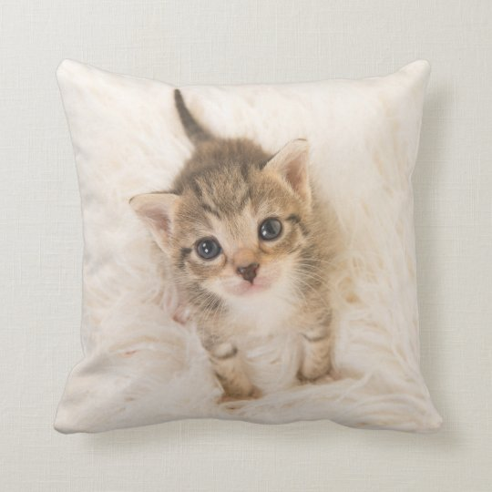 Baby cat Pillow