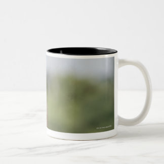 Baby Chacma Baboon (Papio ursinus) riding Two-Tone Coffee Mug