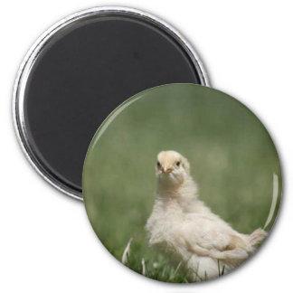 Baby Chick 2 Inch Round Magnet