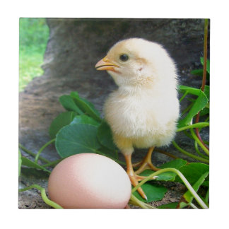 Baby Chick Chicken With Pink Egg Ceramic Tiles